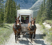 Wilderness Packing - Equine Educational Holidays